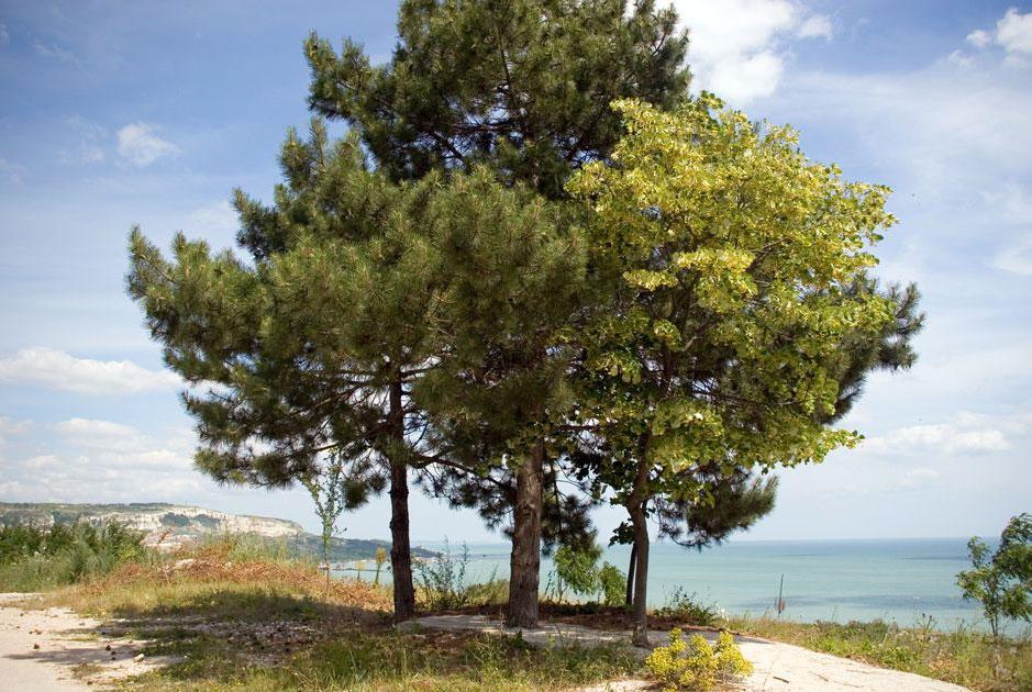 Болгария курорт балчик balchik