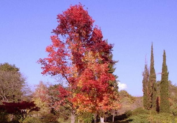 Осень в Сандански.Болгария.